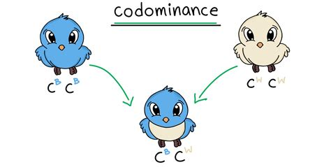Codominance   Definition & Examples