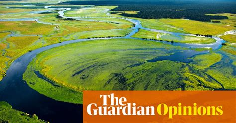 We are destroying rainforests so quickly they may be gone