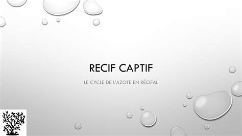 Cycle de l'azote - Mr Recif Captif #3 - YouTube