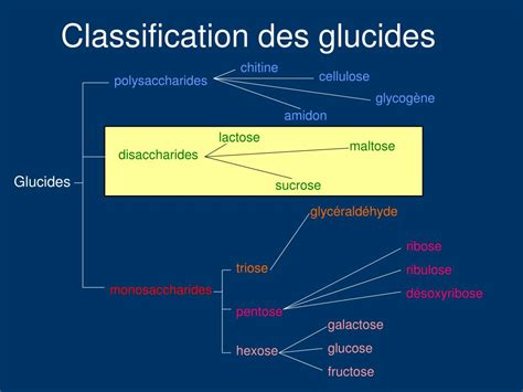 PPT - Les glucides PowerPoint Presentation - ID:434865