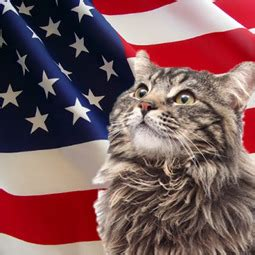 The Signs As Cats On The 4th Of July - Pretentious Zodiac