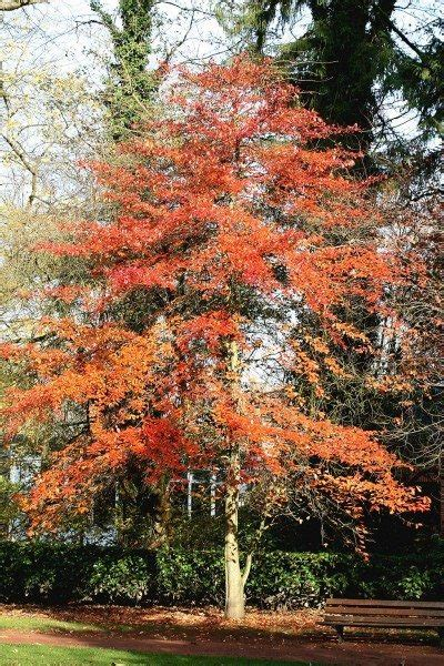 What Are Uses For Tupelo Trees – Growing Various Types Of