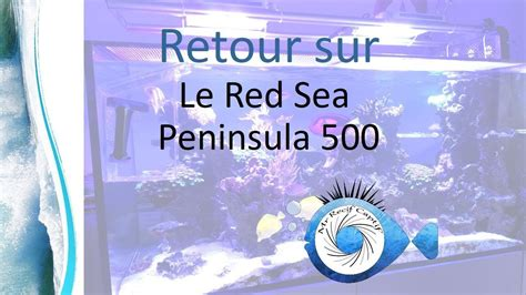 Mon Red sea peninsula 500 - Mr Recif Captif #236 - YouTube