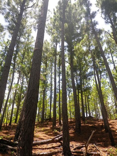 Aneityum Forestry Lease Cancelled   News   dailypost